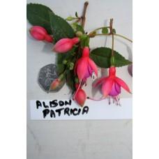 Alison Patrica