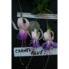 Carmel Blue