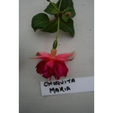 Chiquita Maria