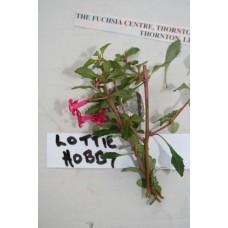 LOTTIE HOBBY