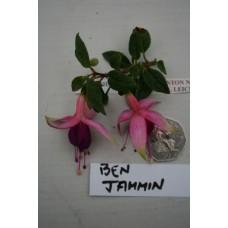 BENJAMMIN